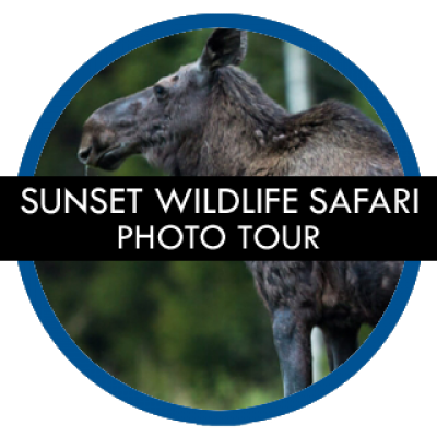 stockholm-gay-tours-sunset-wildlife-safari-photo-tour