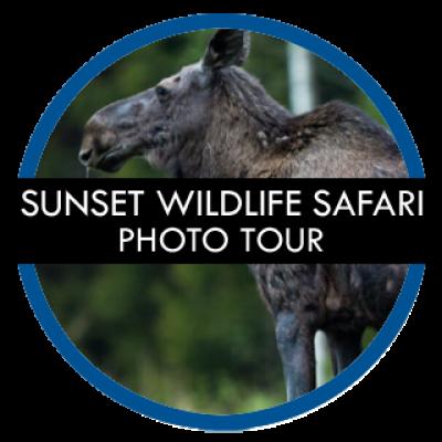 stockholm-gay-tours-sunset-wildlife-safari-photo-tour