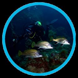 Diving in Menorca